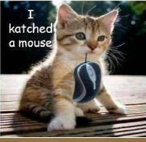 cute kittens quotes - Google Search | MAKES YOU SQUEAL, OR ...
