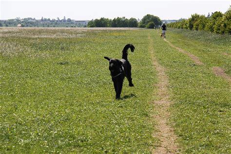 englischer garten münchen hundewiese hundewiesen in und um m 252 nchen k 246 rbchen 174