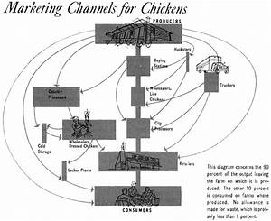 Diagram    Marketing Channels For Chickens