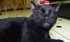 Sylvester Talking Kitty Cat