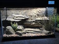 Aquatic Turtles Tank Rocks