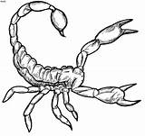 Scorpion Clipart Scorpio Coloring Pages Desert Tattoo Printable Adult Animals sketch template
