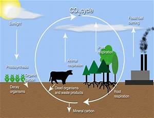 What elements do comprise carbon dioxide? – V4 Online
