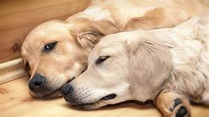 Why bonded pair... Dogs For Adoption