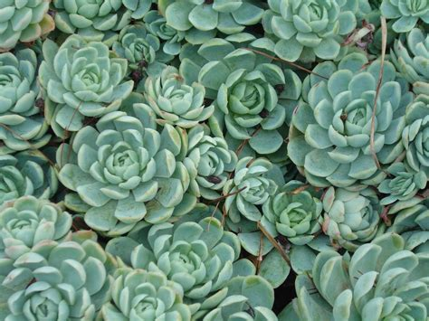 images succulents succulents 1 by serraangel on deviantart
