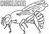 Bumblebee Coloring Pages Insect sketch template