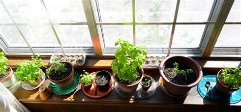20 website to visit if you want a better indoor garden