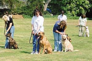 dog training school dog trainers and practicing at home With dog training at home