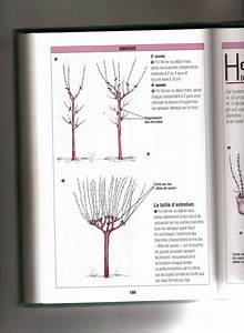 Taille De L Hibiscus : taille de l 39 hibiscus syriacus ~ Melissatoandfro.com Idées de Décoration