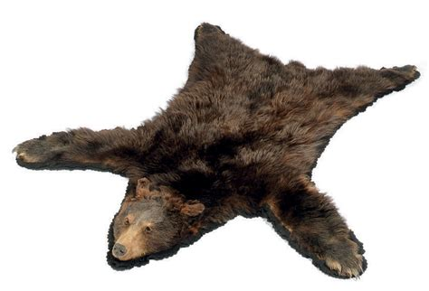 Skin Rug Taxidermy Cost a taxidermy mounted brown skin rug mid 20th century
