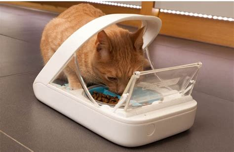 cat puzzle feeder is food better than canned for cats cat clinic