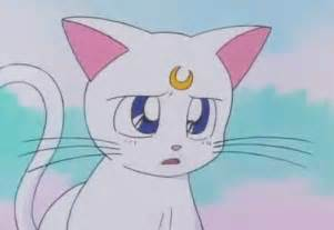 sailor moon cats sailor scouts forever