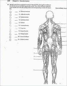 Anatomy And Physiology Coloring Book Answers Chapter 14