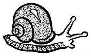 Snail Black And White Clip Art Images Download🤷