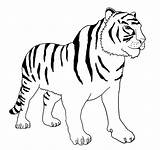 Tiger Coloring Bengal Clipart Stripes Without Books Diagram sketch template