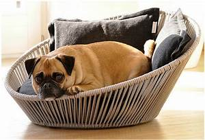 ultimate guide to buy best dog beds 2016 web magazine With best place to buy dog beds