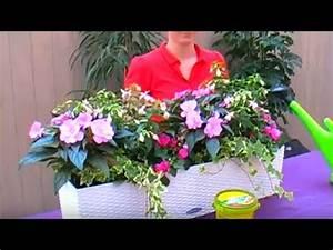 Pflanzen Für Balkonkästen Sonnig : bellandris balkonkasten bepflanzen youtube ~ Bigdaddyawards.com Haus und Dekorationen