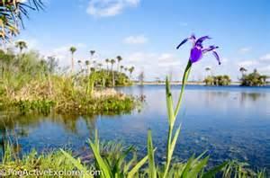 Pretty Wetlands Florida