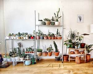 5, Indoor, Plants, That, Are, Good, For, Your, Health