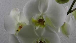 Orchideen Im Glas : orchideen im glas deko ideen mit flora shop youtube ~ A.2002-acura-tl-radio.info Haus und Dekorationen