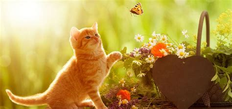 alternative medicine treatments  animals