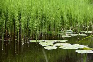 Wasserpflanzen Teich Kaufen : teich mit wasserpflanzen stockfoto bild von frieden ~ Michelbontemps.com Haus und Dekorationen