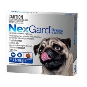 nexgard for cats nexgard chewables for medium dogs 4 1kg 10kg paragone