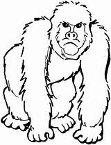 Gorilla Coloring Pages Printable Categories Version sketch template