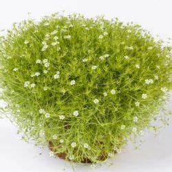 Plante Pour Jardin Japonais : les 31 meilleures images du tableau plantes pour jardin ~ Dode.kayakingforconservation.com Idées de Décoration