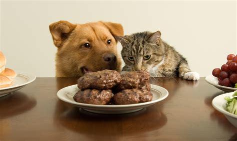 labor day tips pet poison helpline