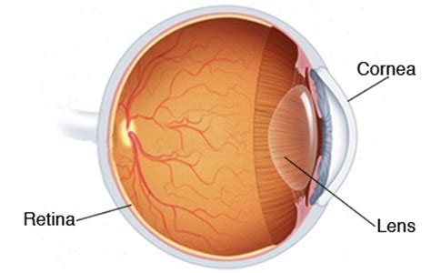 clear plans aaleya koreishi m d cornea specialist cornea