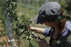 Wann Müssen Apfelbäume Geschnitten Werden : apfelbaum schneiden anleitung vom experten plantura ~ Lizthompson.info Haus und Dekorationen