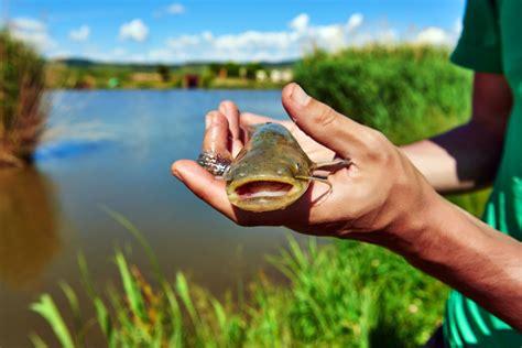 species  brackish aquarium fish