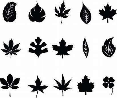 Leaves Silhouette Vector Clipart Foliage Leaf Clip