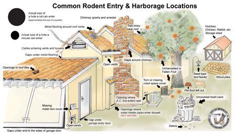 attic door preventions of rodents city of berkeley ca