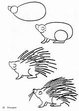 Porcupine Draw Drawing Coloring Pages Easy Animal Drawings Sheet Compassion Animals Bestcoloringpagesforkids Simple Porcupines Step Donkey Tips Giraffe Zoo Sketches sketch template