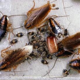 dakgoot reinigen dieren kakkerlakken bestrijden hmb reiniging milieuhygi 235 ne