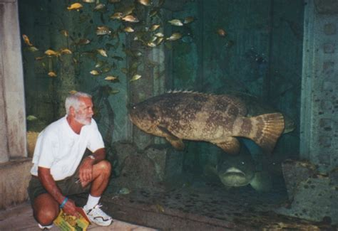 grouper goliath jewfish fishing