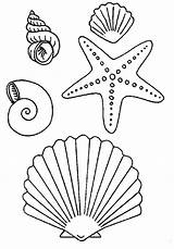 Starfish Seashell Coloring Pages Fish Sea Shells Drawing Simple Drawings Seashells Colouring Dibujo Ocean Crafts Summer C8 Imgkid Kid sketch template