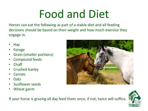 what do horses eat loving your pet looking after your first horse