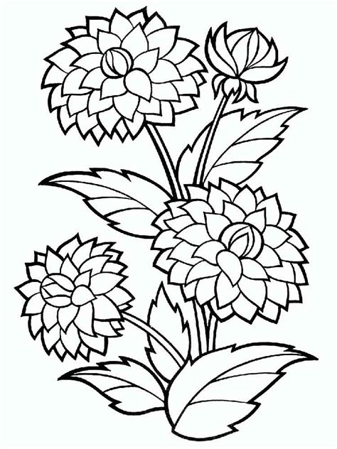 bushy dahlia flower colouring pages picolour