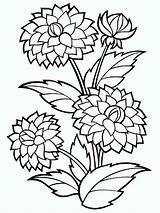 Flower Coloring Zinnia Printable Getcolorings Dahlia Bushy sketch template