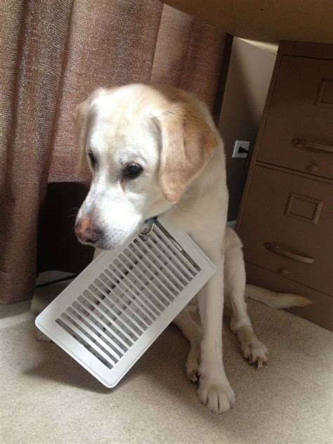 dog vent funny dog pictures entertainment