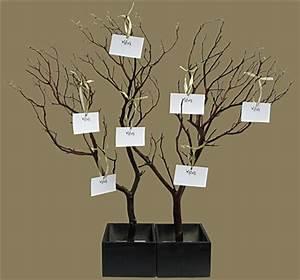 Manzanita Wish Tree Kit (shipping included!) - Blooms