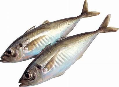 Fish Transparent Resolution Pngimg