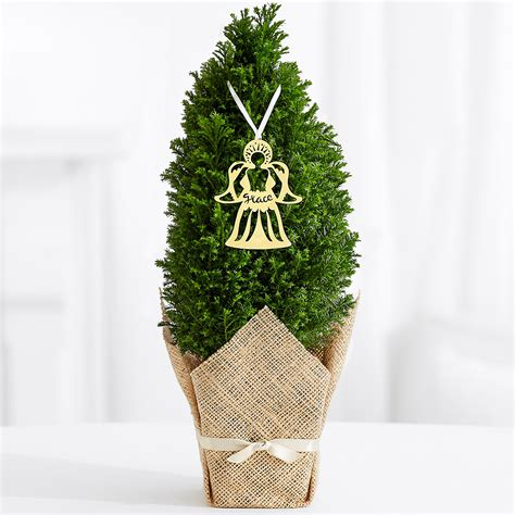 proflowers christmas tree proflowers guardian tree shop your way shopping earn points on tools