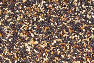 pet shop direct premium bird seed tonic mix kg