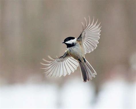 faith    wings amazing flying