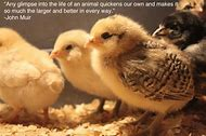 Baby Animals with Funny Quotes