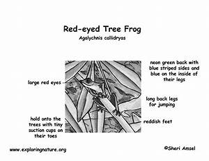 Frog  Red